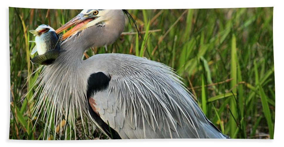 Great Blue Heron Beach Towel featuring the photograph Great Catch by Adam Jewell