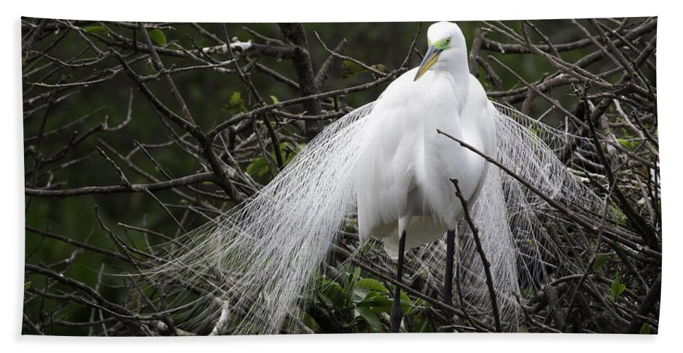Florida Beach Towel featuring the photograph Great Egret In Tree by Fran Gallogly