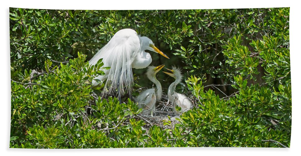 Great Egret Beach Towel featuring the photograph Great Egret With Chicks On The Nest by Louise Heusinkveld