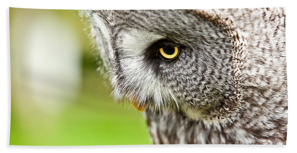 Owl Beach Towel featuring the photograph Great Gray Owl Close Up by Simon Bratt Photography LRPS