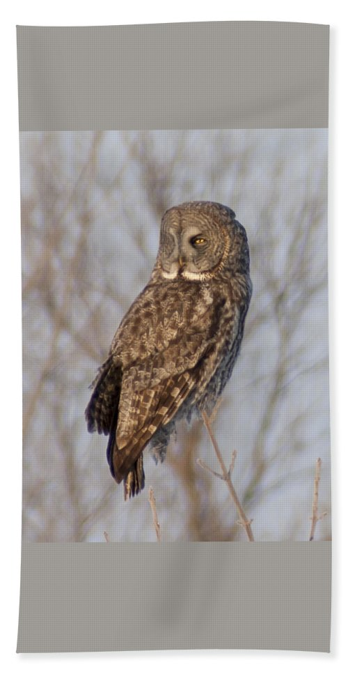 Bird Beach Towel featuring the photograph Great Grey Owl by Richard Kitchen