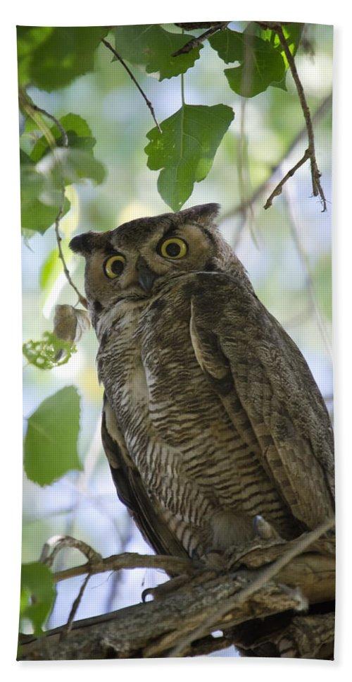 Great Horned Owl Beach Towel featuring the photograph Great Horned Owl On A Branch by Saija Lehtonen