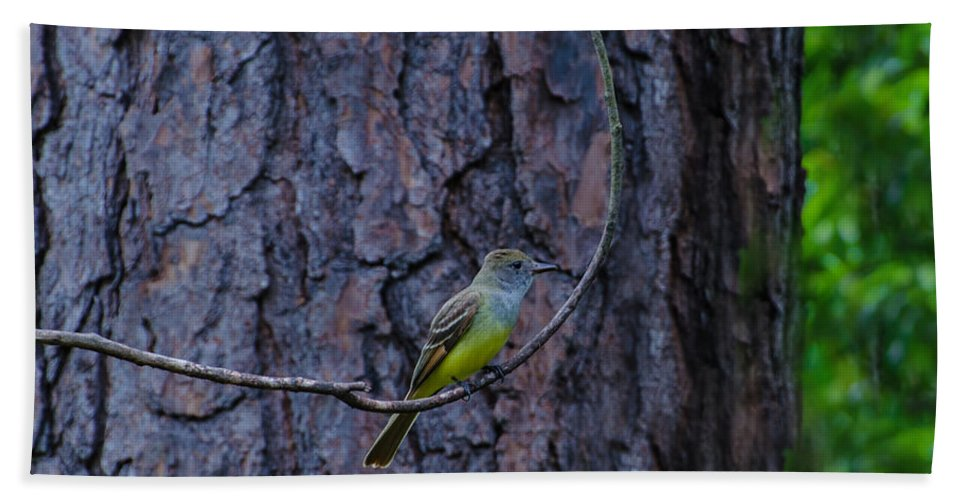 Bird Beach Towel featuring the photograph Greater Crested Flycatcher by Donna Brown