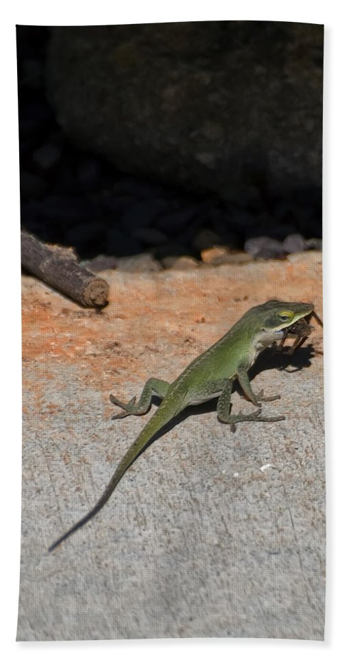 Green Anole Lizard Beach Towel featuring the digital art Green Anole Lizard Vs Wolf Spider by Chris Flees