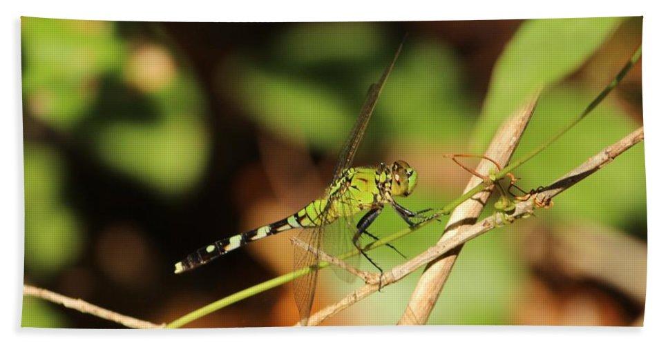 Green Beach Towel featuring the photograph Green Dragonfly by Cynthia Guinn