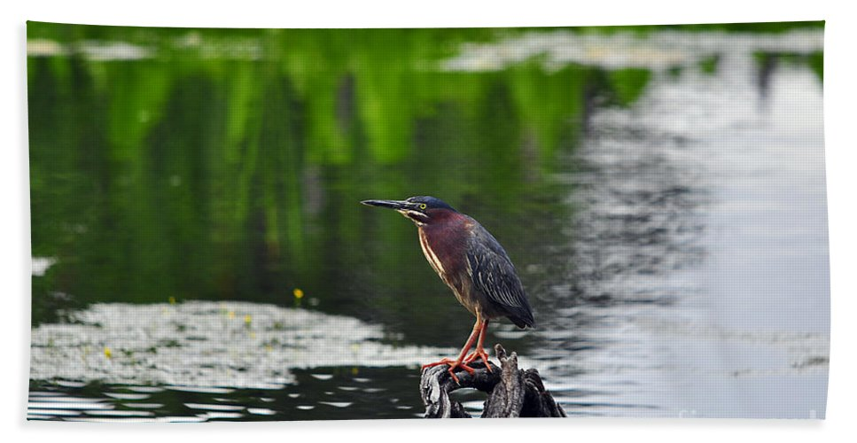 Heron Beach Towel featuring the photograph Green Heron Perch by Al Powell Photography USA