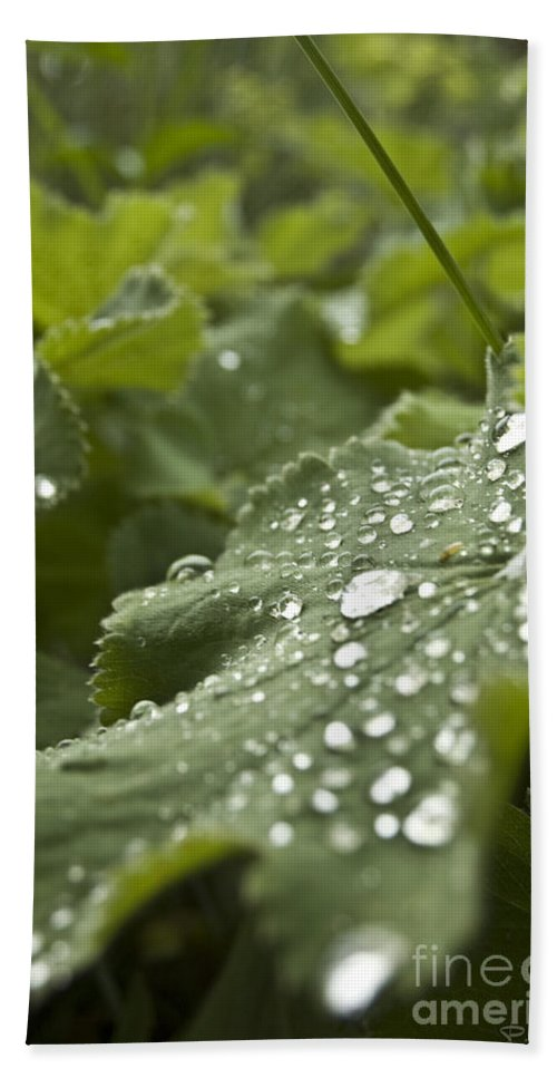 Green Leaf Beach Towel featuring the photograph Green Leaf And Fresh Water Pearl by Patrice Charette