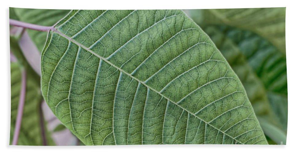 Nature Beach Towel featuring the photograph Green Leaf Macro by Antony McAulay