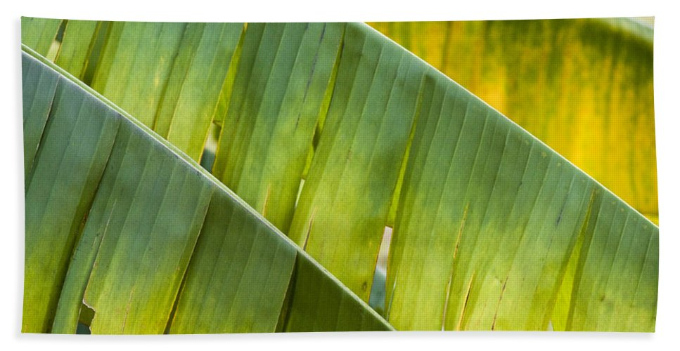 Heiko Beach Towel featuring the photograph Green Leaves Series 14 by Heiko Koehrer-Wagner