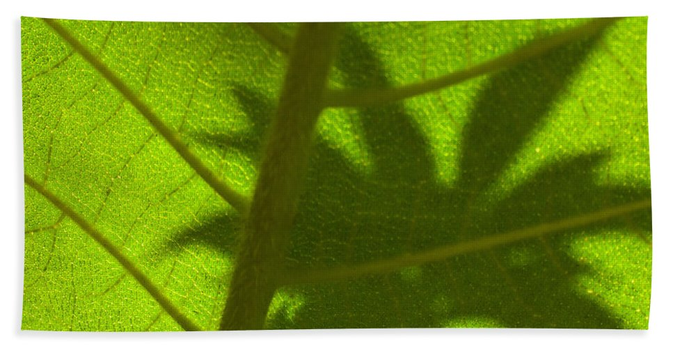 Leaf Beach Towel featuring the photograph Green Leaves Series 3 by Heiko Koehrer-Wagner