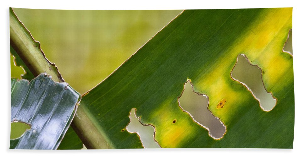 Leaf Beach Towel featuring the photograph Green Leaves Series 5 by Heiko Koehrer-Wagner