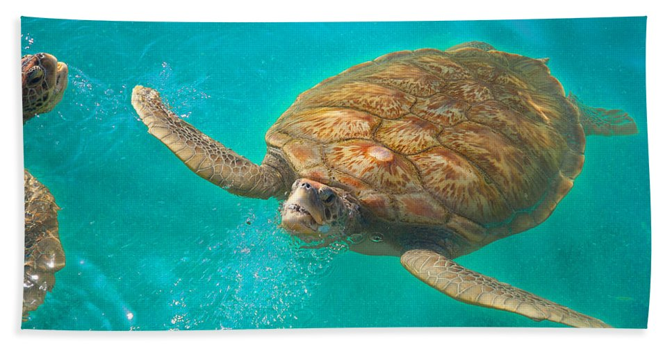 Sea Turtle Beach Towel featuring the photograph Green Sea Turtle Surfacing by Marie Hicks