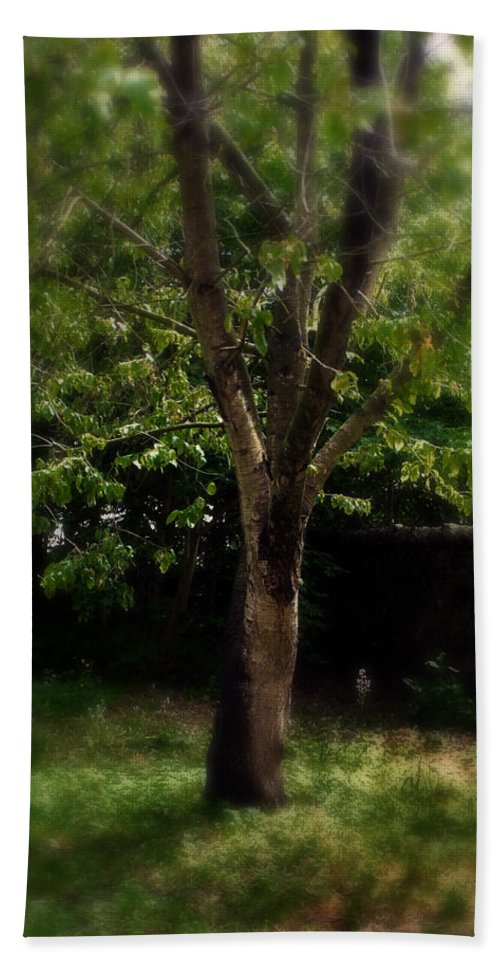 Garden Beach Towel featuring the photograph Green Tree In Park by Doc Braham