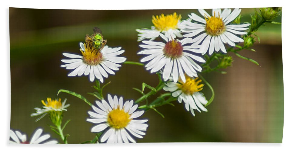 Optical Playground By Mp Ray Beach Towel featuring the photograph Green Wasp And Daisies by Optical Playground By MP Ray