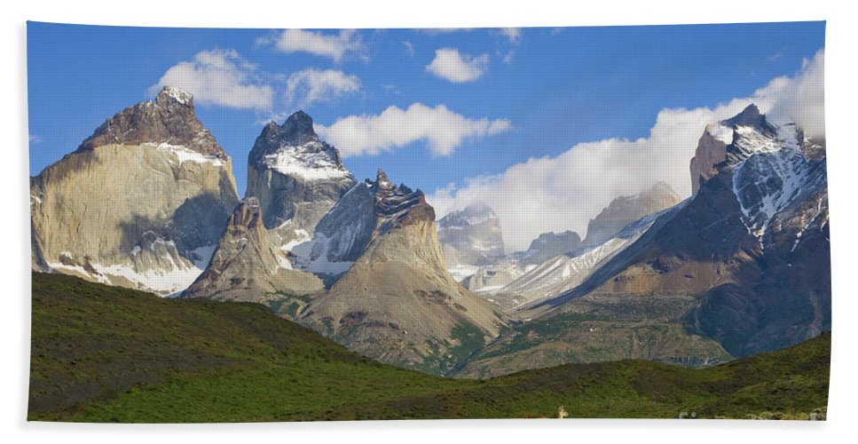 00345710 Beach Towel featuring the photograph Guanaco And Cuernos Del Paine Peaks by Yva Momatiuk John Eastcott