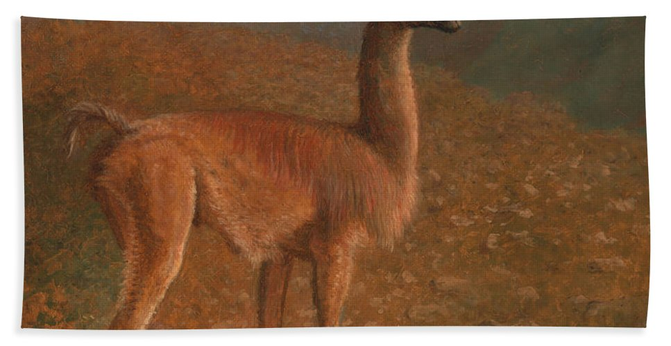 Jacques-laurent Agasse Beach Towel featuring the painting Guanaco by Jacques-Laurent Agasse