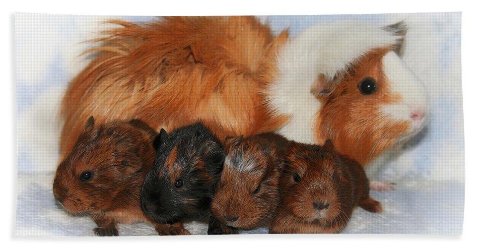 Photo Beach Towel featuring the photograph Guinea Pig Family by Jutta Maria Pusl