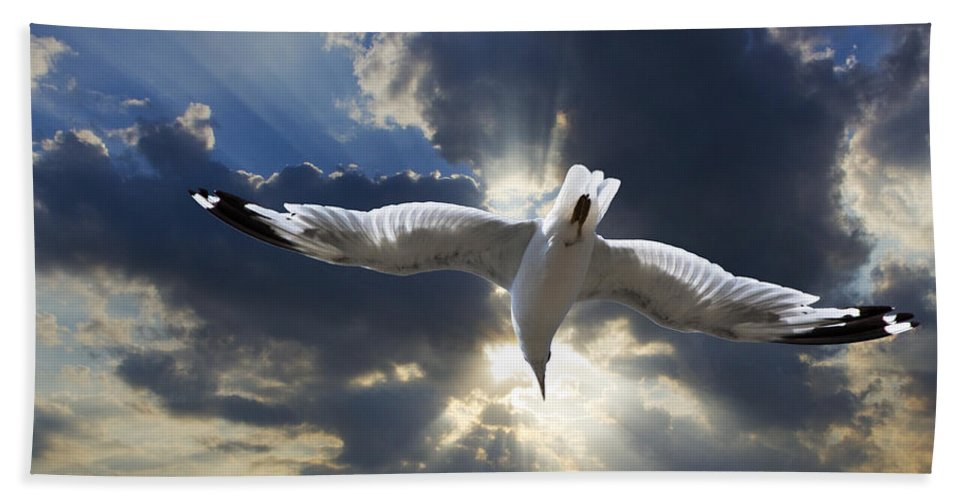 Art Beach Towel featuring the photograph Gull Flying Under A Radiant Sunburst by Randall Nyhof