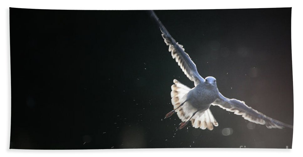 Seagull Beach Towel featuring the photograph Gull In Flight by Karol Livote