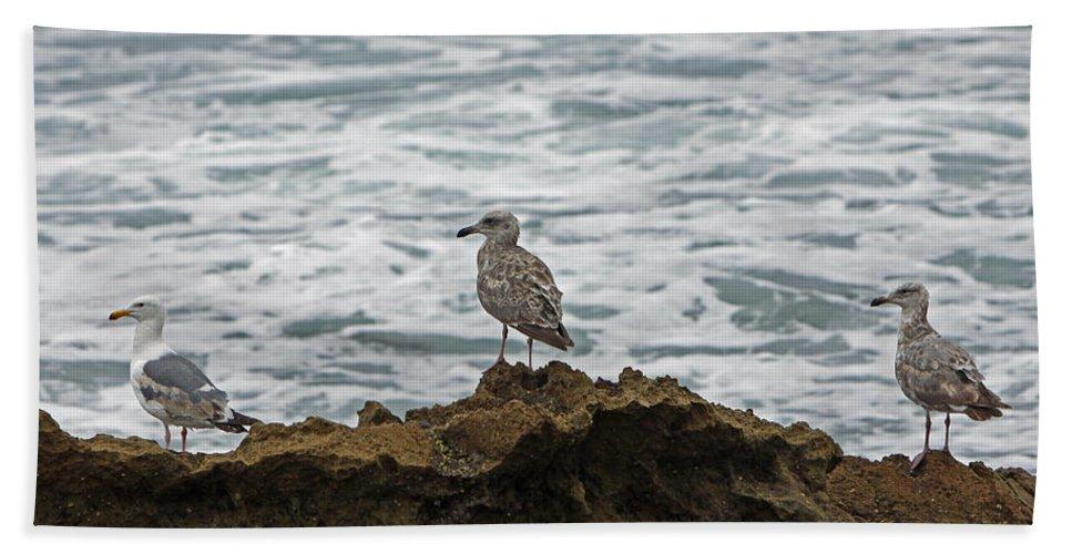 Sea Gulls Beach Towel featuring the photograph Gulls Podium by Shoal Hollingsworth