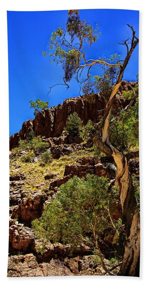 Gum Tree Beach Towel featuring the photograph Gum Tree At Ellery Creek V2 by Douglas Barnard