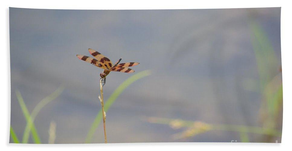 Halloween Beach Towel featuring the photograph Halloween Pennant Dragonfly 2 by Scott Hervieux