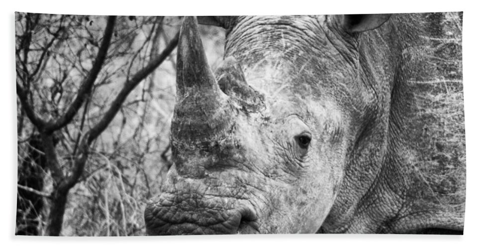 Africa Beach Towel featuring the photograph Handsome by Shauna Milton