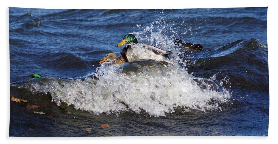 Mallard Beach Towel featuring the photograph Hang 10 by Lori Tordsen
