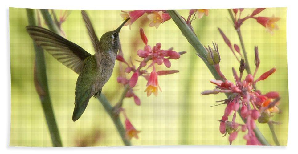 Hummingbird Beach Towel featuring the photograph Happy As A Hummingbird by Saija Lehtonen