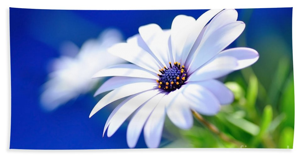 Photography Beach Towel featuring the photograph Happy White Daisy - Blue Bokeh by Kaye Menner