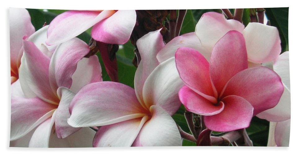 Flower Beach Sheet featuring the photograph Hawaii Plumeria by Crystal Miller