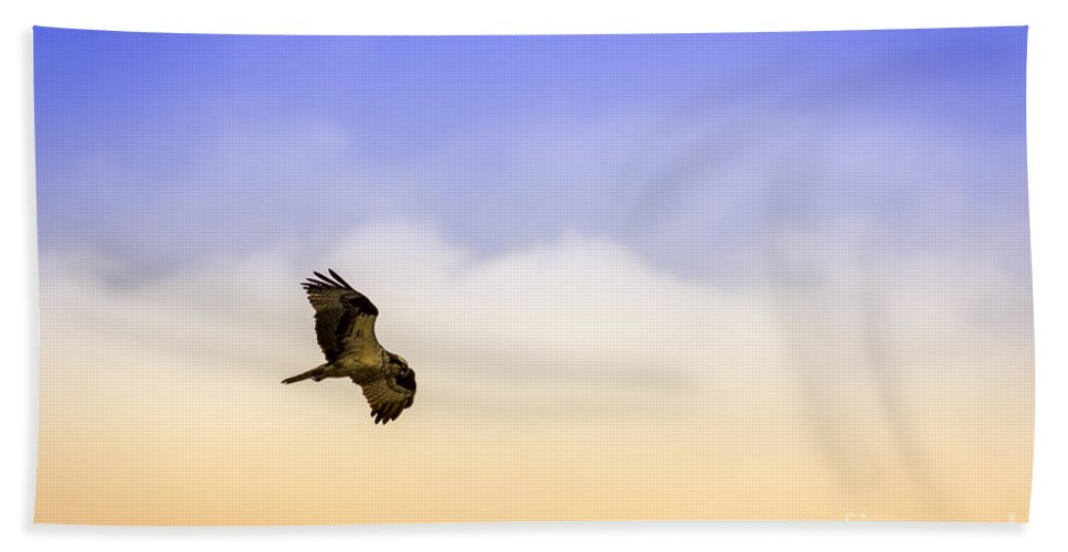 Osprey Beach Towel featuring the photograph Hawk Over Head by Marvin Spates