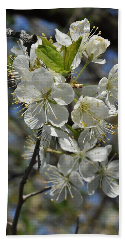Flower Beach Towel featuring the photograph Hawthorn Flowers by Valerie Kirkwood