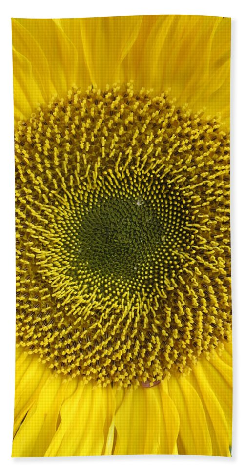 Daisy Beach Towel featuring the photograph Here Comes The Sun.... by Rosita Larsson