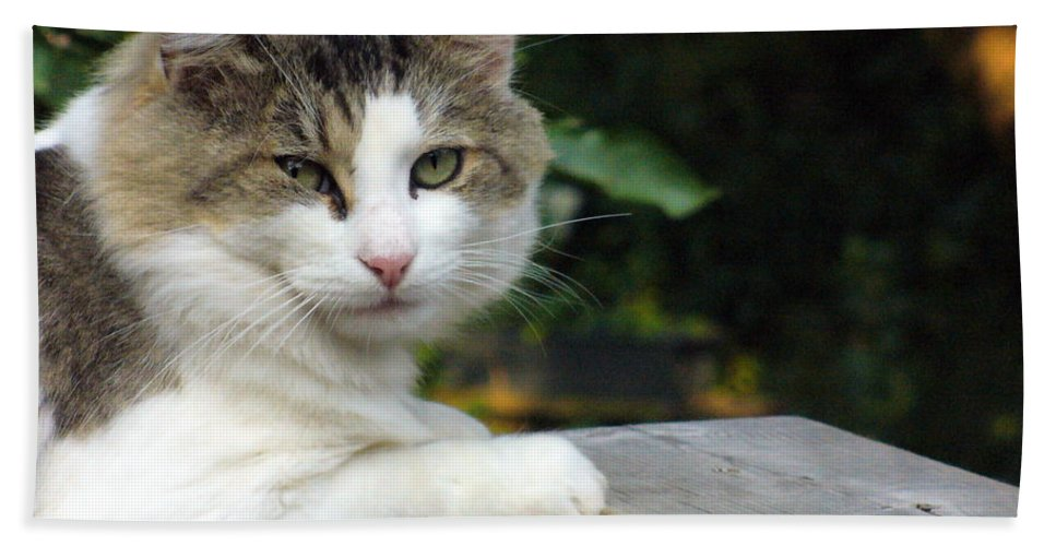 Cat Photography Beach Towel featuring the photograph Here Is Looking At You by Lingfai Leung