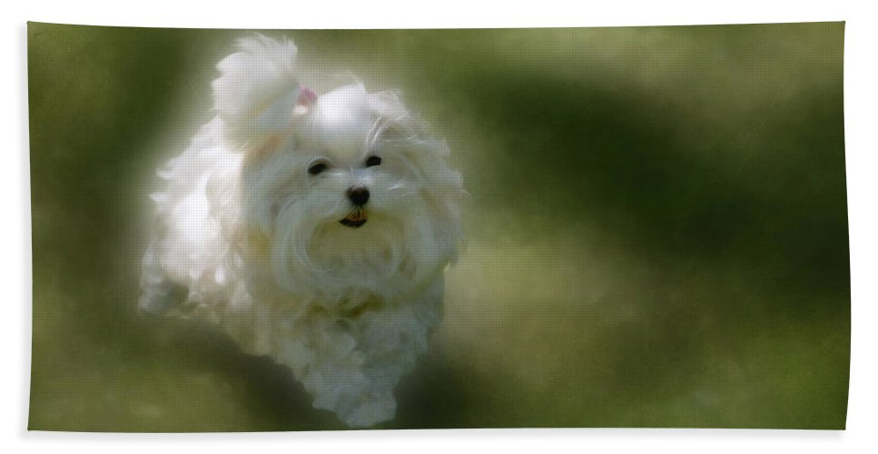 Dogs Beach Towel featuring the photograph Here She Comes by Lois Bryan