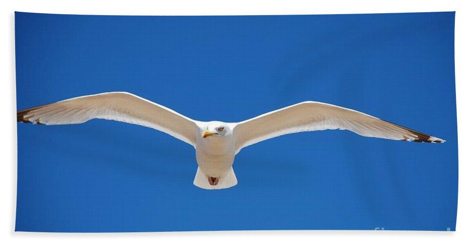 Herring Beach Towel featuring the photograph Herring Gull In Flight by David Fowler