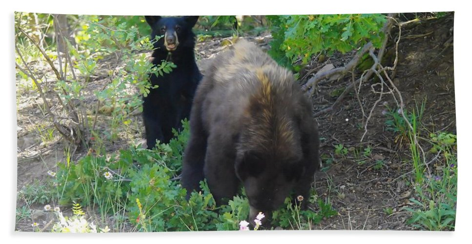 Bears Beach Towel featuring the photograph Hey Mom Save Some For Me by Jeff Swan