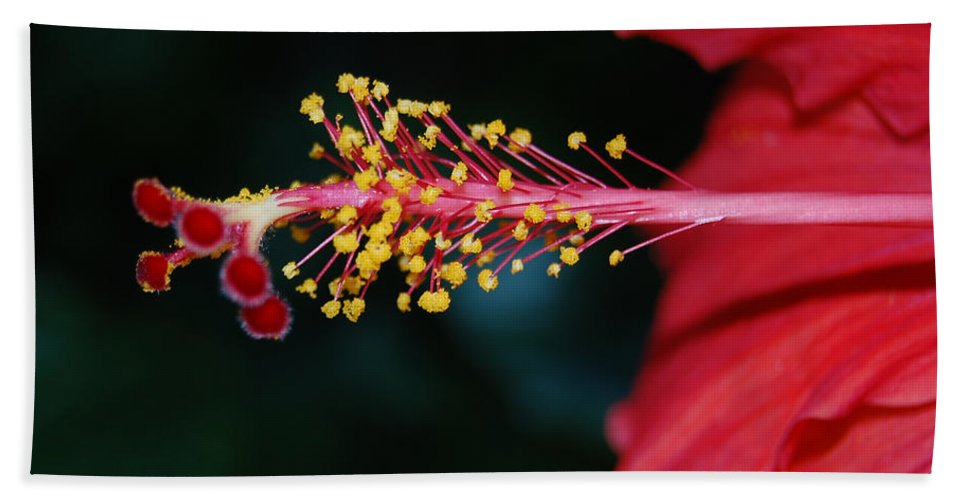 Hibiscus Beach Towel featuring the photograph Hibiscus 3 by Leticia Latocki