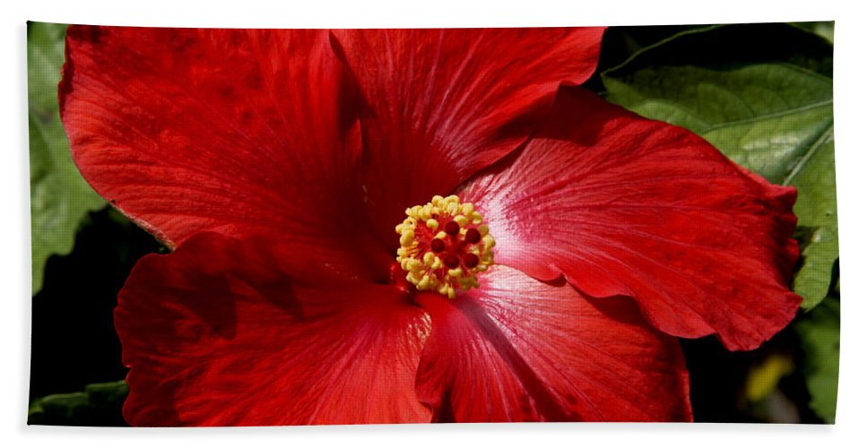 Hibiscus Beach Towel featuring the photograph Hibiscus Landscape by Jeanette C Landstrom