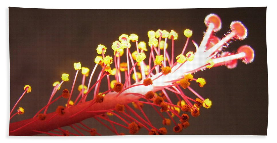 Hibiscus Beach Towel featuring the photograph Hibiscus by Mary Ellen Mueller Legault