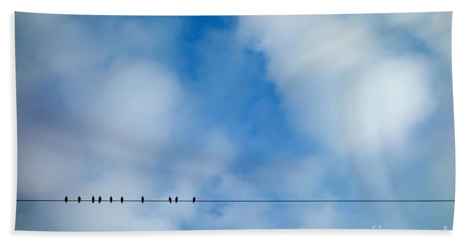 Birds On A Wire Beach Towel featuring the photograph High Wire Act by Jacqueline Athmann