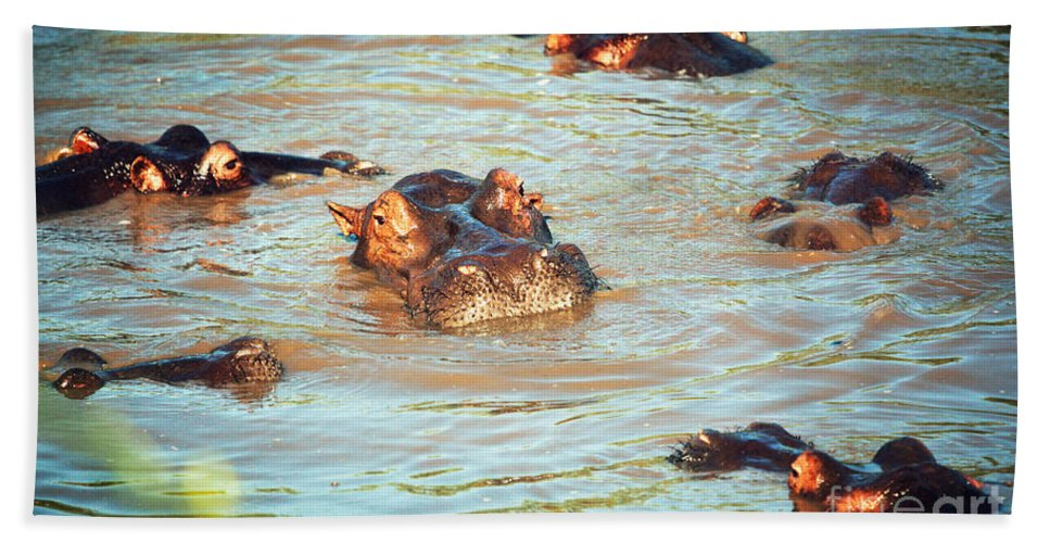 Hippo Beach Towel featuring the photograph Hippopotamus Group In River. Serengeti. Tanzania by Michal Bednarek