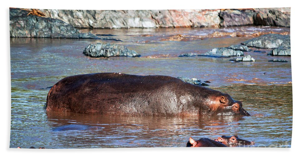 Hippo Beach Towel featuring the photograph Hippopotamus In River. Serengeti. Tanzania by Michal Bednarek