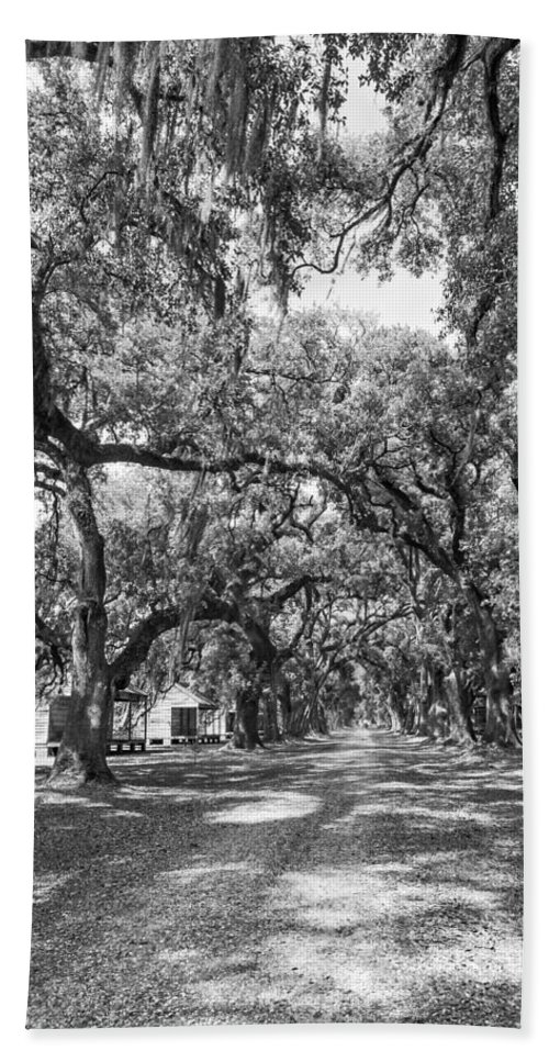 Evergreen Plantation Beach Towel featuring the photograph Historic Lane Bw by Steve Harrington