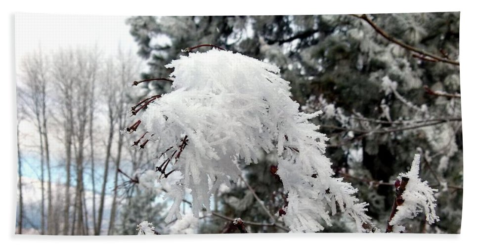 Hoarfrost 19 Beach Towel featuring the photograph Hoarfrost 19 by Will Borden