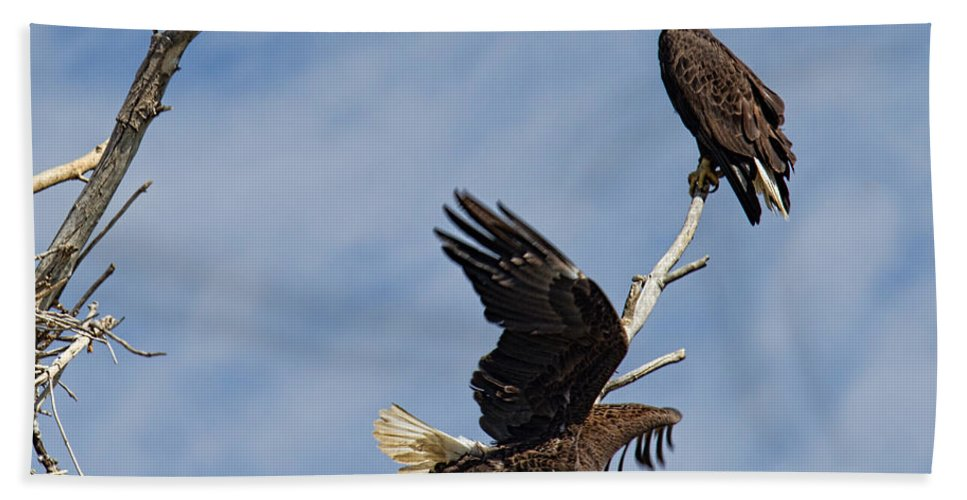 Bald Eagle Photograph Beach Towel featuring the photograph Home Defense by Jim Garrison