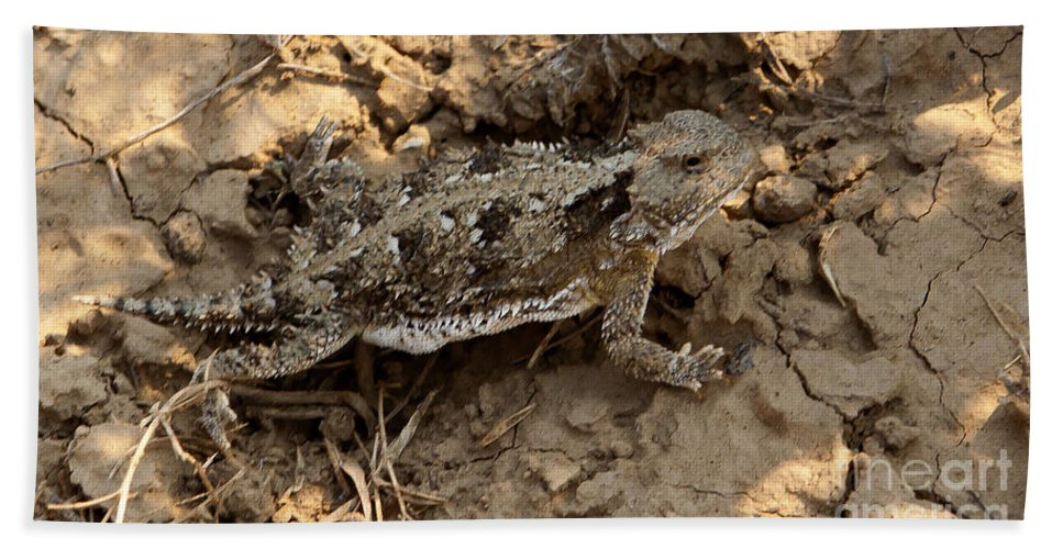Lizard Beach Towel featuring the photograph Horned Lizard  #8888 by J L Woody Wooden