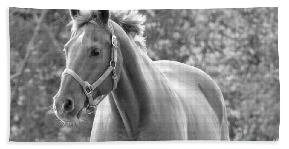 Horse Beach Towel featuring the photograph Horse Black And White by Glenn Gordon