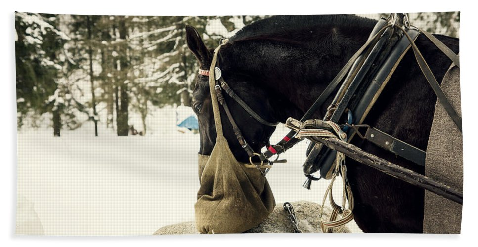 Snow Beach Towel featuring the photograph Horse Cinema Style by Pati Photography